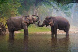 elelphant-camps
